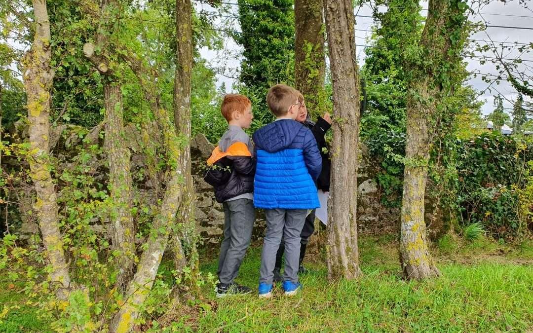 Native Irish Trees